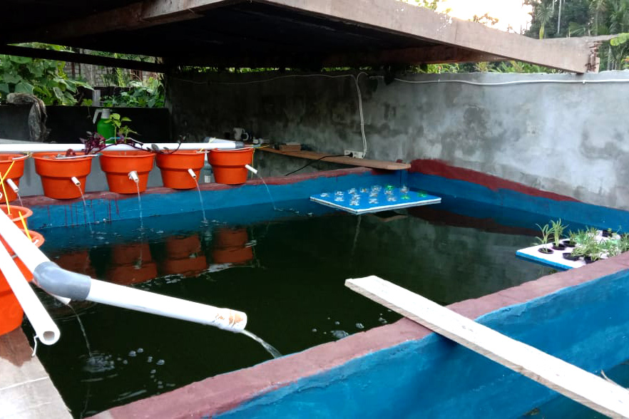 Agro-hydrocultuur in Sentani